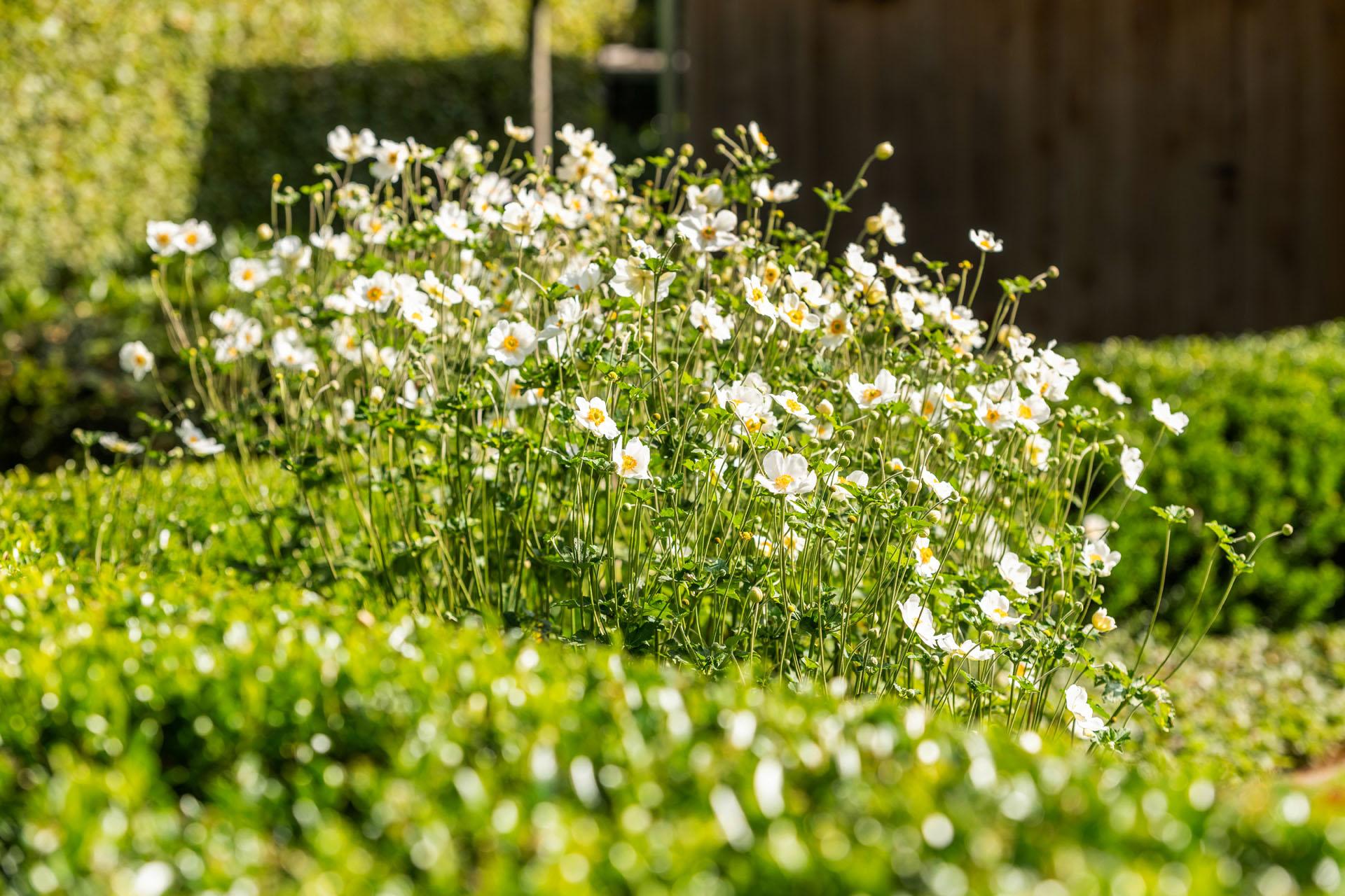 Klassieke tuin - V&V Groenservice
