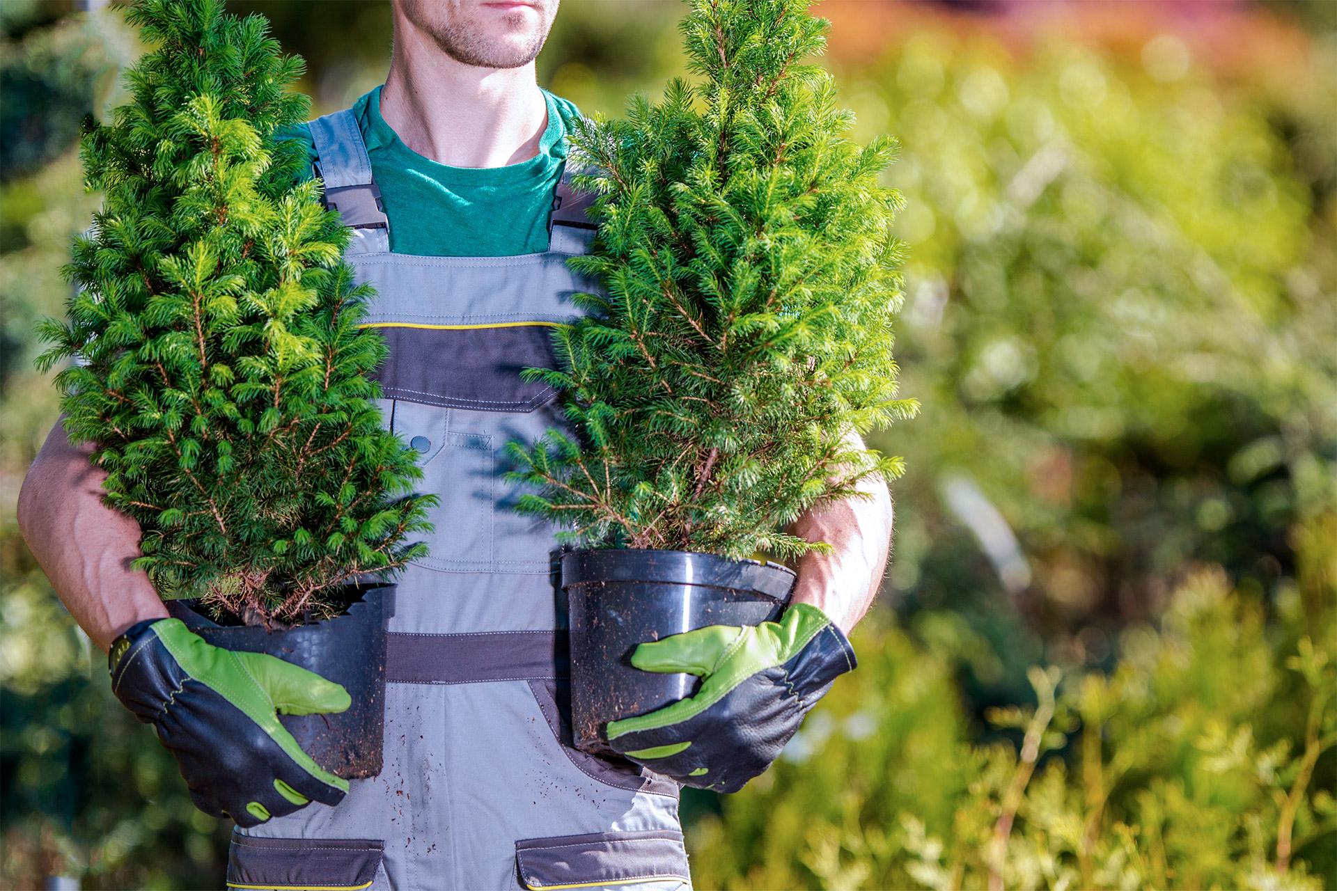 Plantwerken - V&V Groenservice